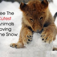 Cover Cute animals loving the snow